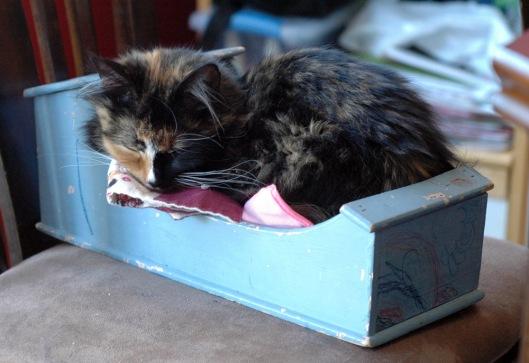 rosie - feel bunny's bed