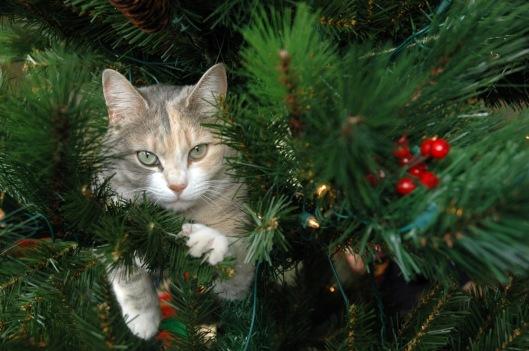 ella_tree